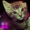 kitten-xena