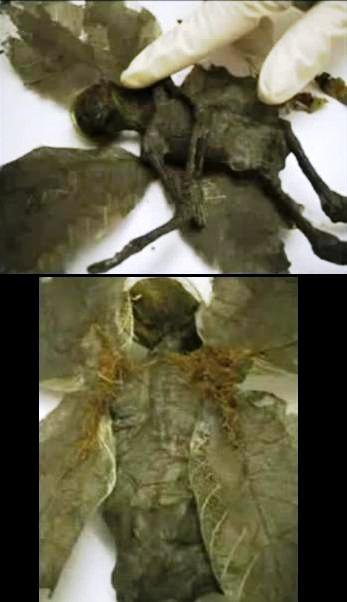 flying alien humanoid mystery solved partie 3