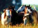 Photo de lou-et-les-poney