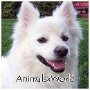 Photo de AnimalsxWorld