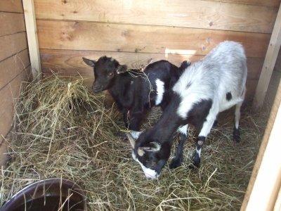 bébé Bilbo et sa maman Bambou dans leur cabane