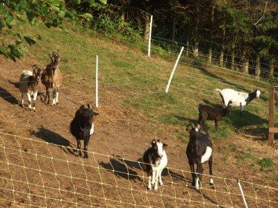 le troupeau au complet après le départ de Trombine, Grenadine et Comète vers leur nouvelle famille