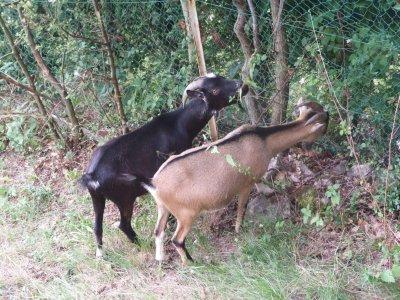 Gaston et Ficelle, les deux demi-frères, inséparables...