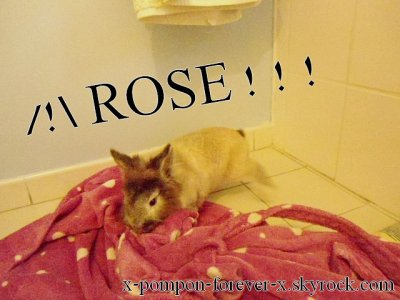 _ATTENTION ROSE ! _