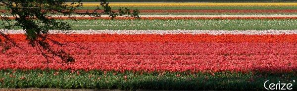 Une fleur est un être entièrement poétique.