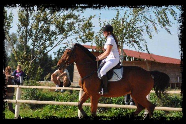 """"""" Le cheval enseigne à l'homme la maîtrise de soi et la faculté de s'introduire dans les pensées et les sensations d'un autre être vivant """" Alois Podhajsky"""