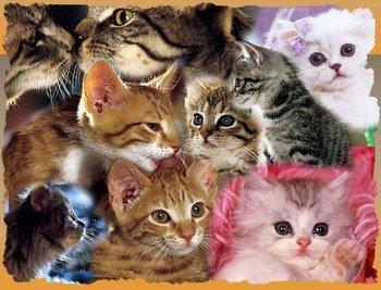 I love cats <3