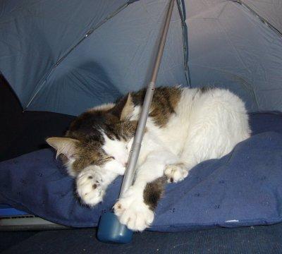 Kiwi et son parapluie :)