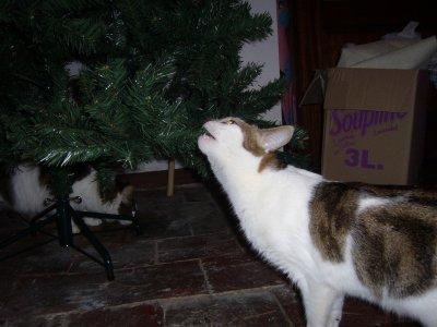 Les chats et le sapin de Noël
