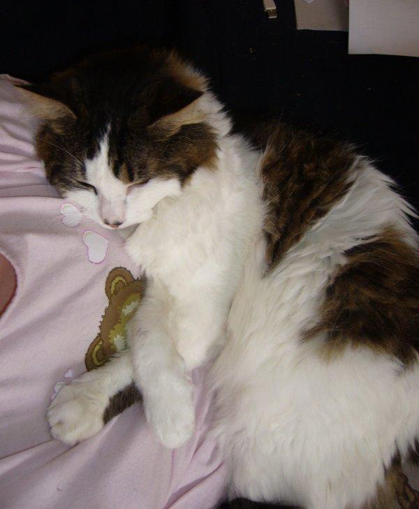 Kiwi qui dort sur sa maman $)