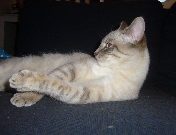 Aïko pose