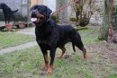 Photo de denka-rott16