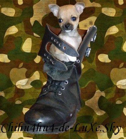 Chihuahua N°2 ♥ (Manu, 44 ans, Département 54 Lorraine)