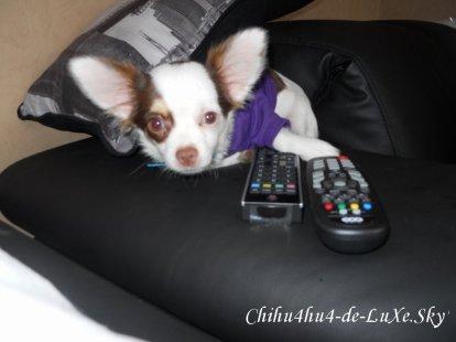 Chihuahua N°8 ♥  (Tiffany, 20 ans, Belgique)