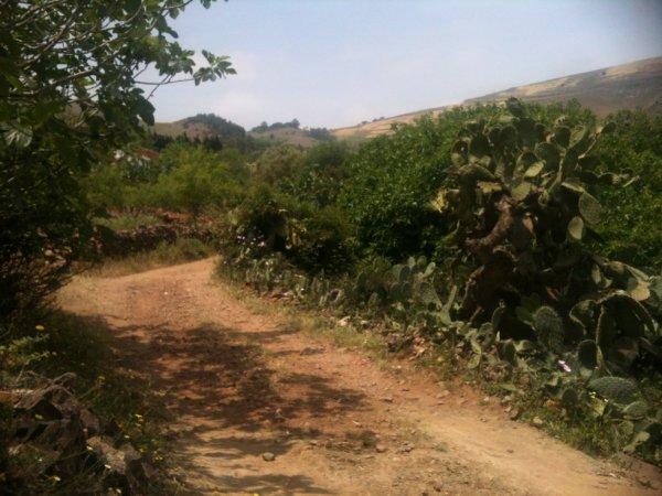 Tamrabaht : 05-2012