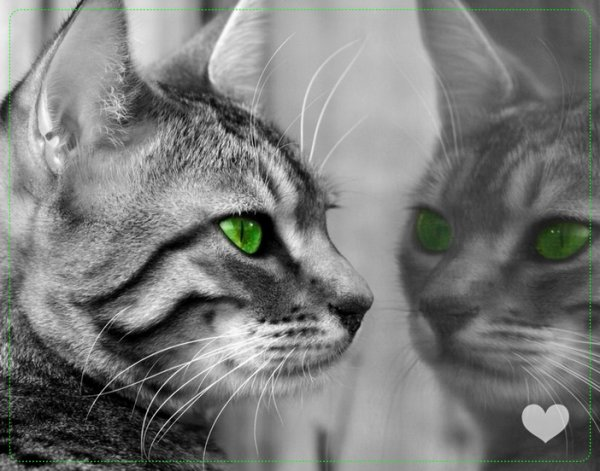 Un animal pas comme les autres : Le chat.