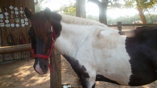 Je commence les présentations des poney :
