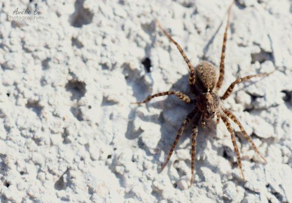 J'aime les araignées ! (*ironie*)