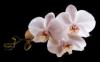.♥..♥..♥..♥..♥..♥.l ame des fleurs.♥..♥..♥..♥..♥..♥