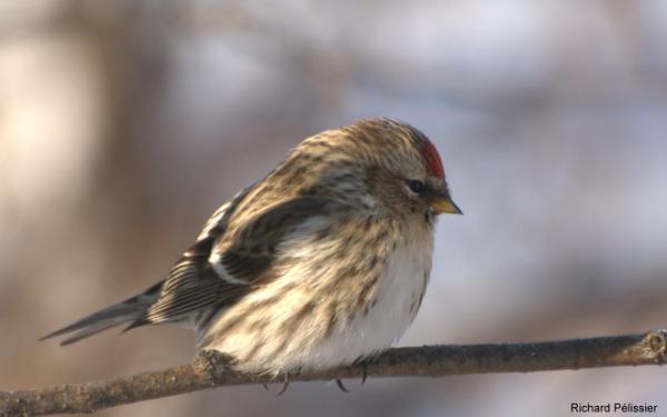 ♥ ☼ ♥ ☼ ♥ ♥ ☼ ♥ ☼la migration ♥ ☼ ♥☼ ♥☼ ♥☼ ♥