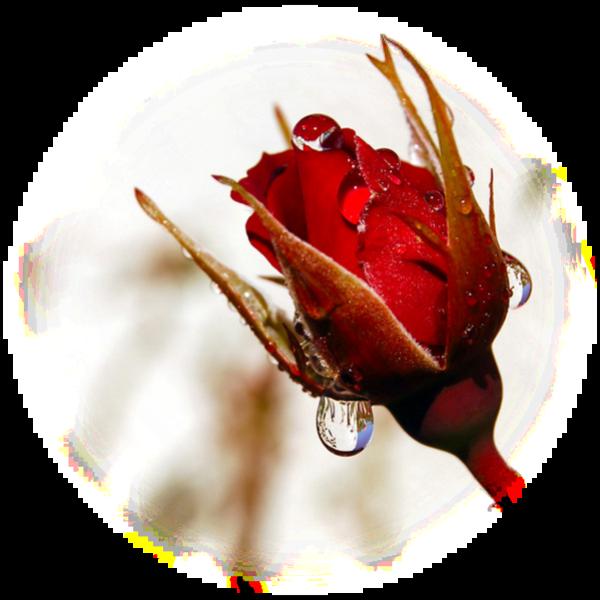_______,-(''-.,(''-.,*♥*j ecrirais des poemes,.-''),.-'')-,_______