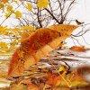 ________,-(''-.,(''-.,*♥,.-'')vent d automne,.-'')-,________