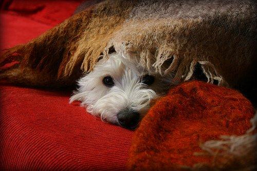 .*.*.....♫...les chiens et le froid...♫.....*.*.