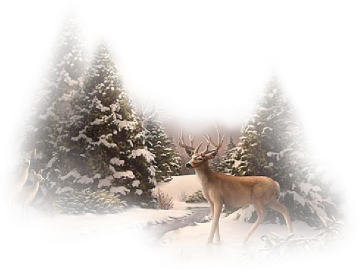 (Ѽ)(,,##══la neige papillonne═════(Ѽ)