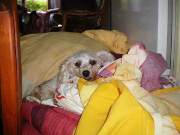 ...♫* ♥ ~♣ont reste coucher*♫ *♥~ ♣*♫.