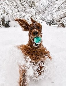 ✿✿ﻼღ♥ﻼღ✿attention✿ﻼღ♥ﻼღ✿à la neige✿ﻼღ♥ﻼღ✿✿