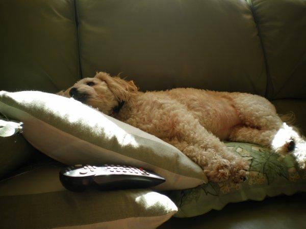 .✿..✿..✿..✿ ✿..✿.la sieste.✿..✿..✿ .✿..✿..✿❤