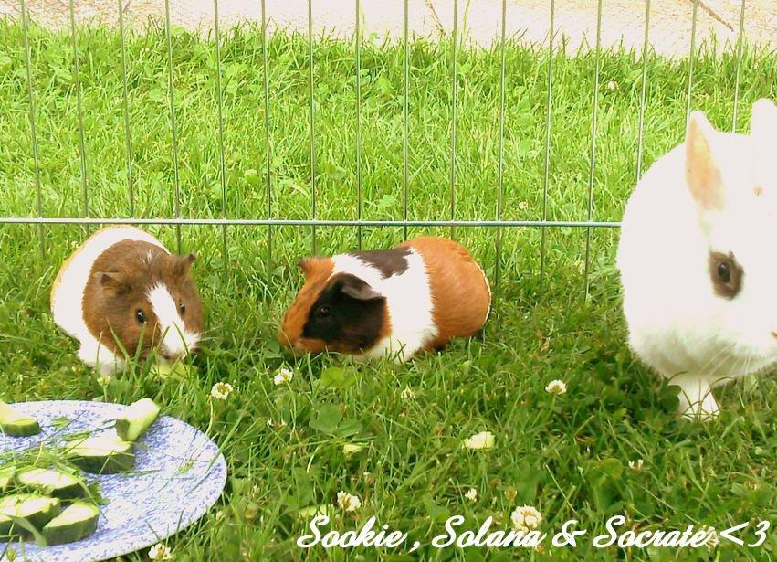 Sookie & Solana ♥