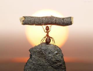 هل تعلم ان النملة من أقوى المخلوقات في هذا الكون