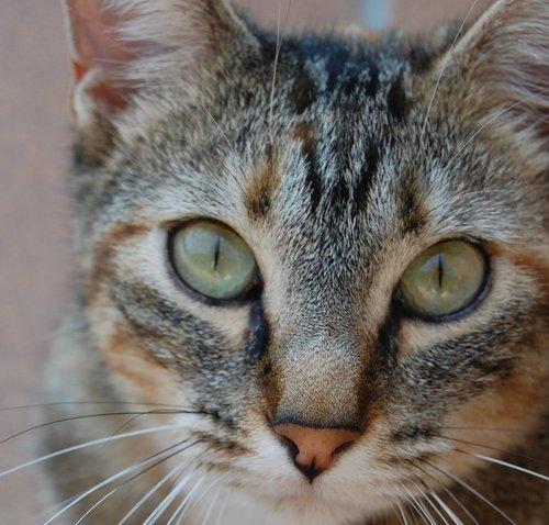 La vue des chat