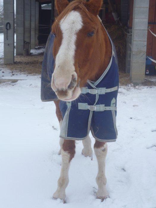 Bienvenue sur le blog d'Husar mon cheval ( chausette )