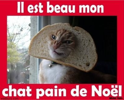 Mon chat pain de Noël