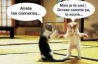 animaux trop drole
