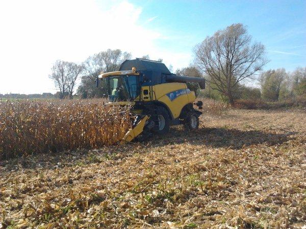 mais grain 2012