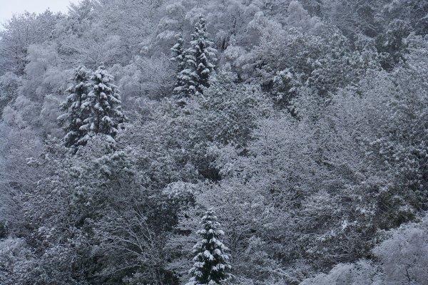 Neige à Bergen