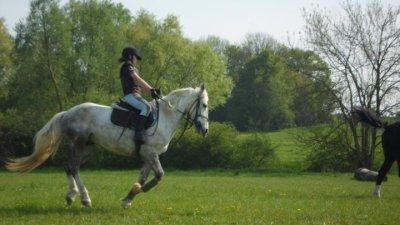 """""""La plus belle danse , est celle que tu partages avec ton cheval """""""
