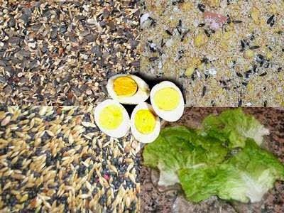 البيض المسلوق وفوائده الغذائية للكناري