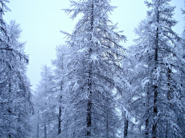 """Photo n°3: """":Le bonheur c'est comme la neige : il est doux, il est pur et il fond.."""""""