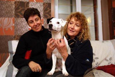 Empoisonné et enterré vivant : Ethan le chien miraculé