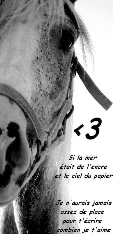 lui, tout simplement lui ❤ Voici, mon meilleur ami, ma raison de vivre, celui qui a toujours été là quand d'autres me faisaient souffrir, celui qui a toujours su me redonner le sourire, celui pour qui je donnerais ma vie... Mon cheval