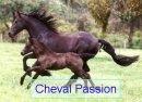 Photo de ChevalPassion39879
