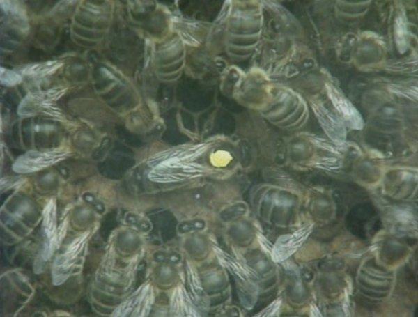 Le printemps reviens les abeilles aussi ! ADUP