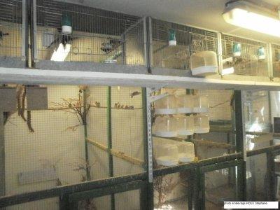 quelques photos de ma pièce d'élevage