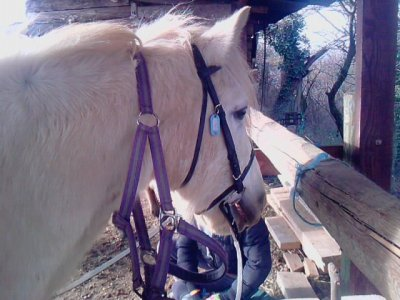 je chevaux de l'equitation ou je suis