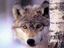 Photo de Small-wolf30