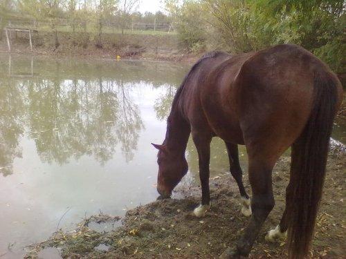 Pause à l'étang